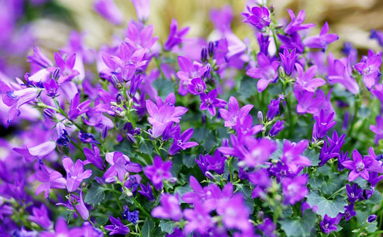 花色は豊富です