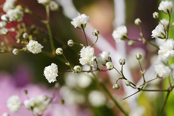 小さな花を多数付ける