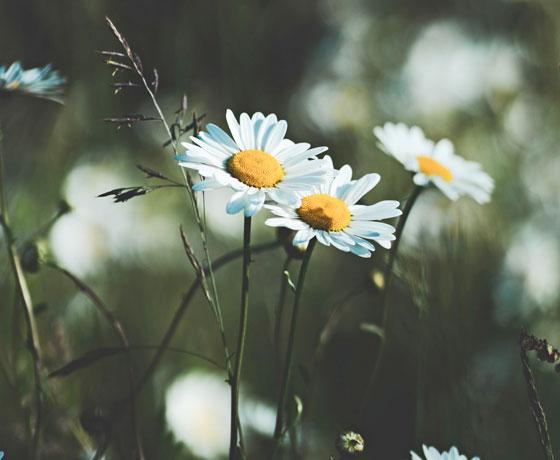 春に開花する