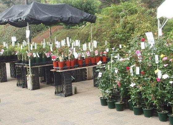 苗木を売る園芸店