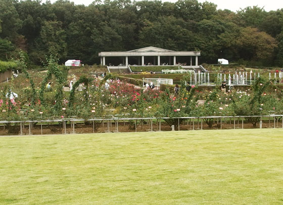 秋の神代植物公園・バラ園