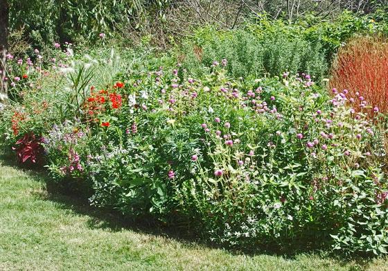 秋の里山ガーデンの草花