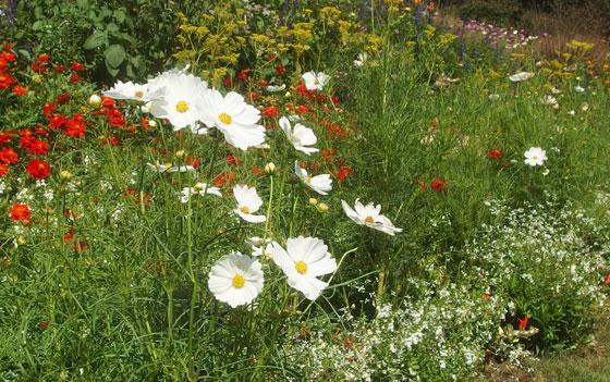 秋の里山ガーデン 草花たち