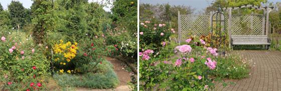 秋の日の花菜ガーデン