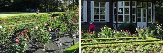 秋の旧古河庭園