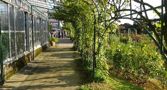 バラ園の秋