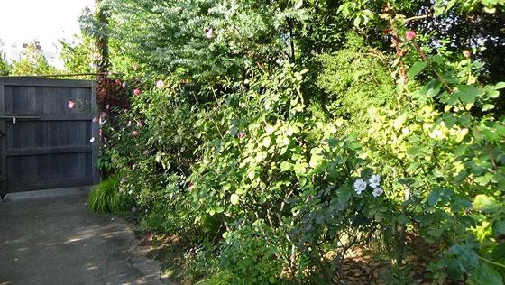 秋のバラ園風景