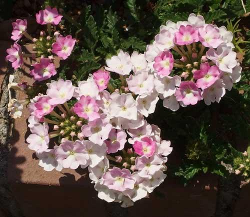 淡いピンク色の花