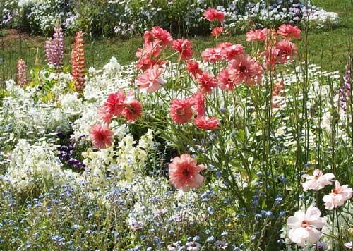 季節の草花です