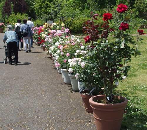 鉢植えが並ぶ風景