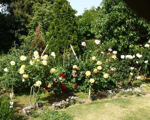 春バラの咲く花菜ガーデン